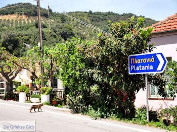 Leuk dorpje Patelari Platanias und Stalos (Platanias Chania Kreta - Stalos Chania Kreta) foto 4  | Chania | Kreta - Foto GriechenlandWeb.de