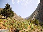 Vanaf Agia Roumeli naar de Samaria kloof | Chania Kreta | Griekenland - Foto van De Griekse Gids