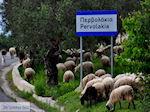 Traditioneel dorp Deliana | Chania Kreta | Foto 15 - Foto van De Griekse Gids
