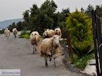 Traditioneel dorp Deliana | Chania Kreta | Foto 16 - Foto van De Griekse Gids