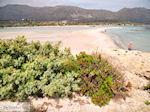 GriechenlandWeb.de Zandstrand Elafonisi (Elafonissi) | Chania Kreta | Foto 49 - Foto GriechenlandWeb.de