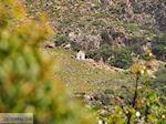 Falassarna (Falasarna) Chania Kreta | Griekenland | Foto 28 - Foto van De Griekse Gids