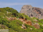 Oud Falassarna (Falasarna) Chania Kreta | Griekenland | Foto 32 - Foto van De Griekse Gids