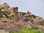 GriechenlandWeb.de Wilde geiten Falassarna (Falasarna) Chania Kreta | Griechenland | Foto 41 - Foto GriechenlandWeb.de