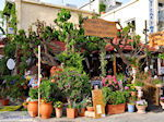 Georgioupolis   Chania Kreta   Foto 19 - Foto van De Griekse Gids