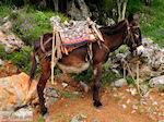Lassithi vlakte Kreta | Griekenland | De Griekse Gids foto 27 - Foto van De Griekse Gids