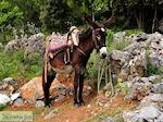 Lassithi vlakte Kreta | Griekenland | De Griekse Gids foto 28 - Foto van De Griekse Gids