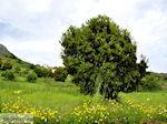 Lassithi vlakte Kreta | Griekenland | De Griekse Gids foto 34 - Foto van De Griekse Gids