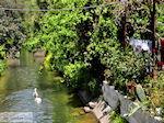 GriechenlandWeb.de Leuk dorpje Patelari Platanias und Stalos (Platanias Chania Kreta - Stalos Chania Kreta) foto 2  | Chania | Kreta - Foto GriechenlandWeb.de