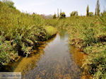 GriechenlandWeb.de De rivier in Platanias  | Chania | Kreta - Foto GriechenlandWeb.de