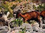 Samaria Kloof | Kreta | Griekenland foto 3 - Foto van De Griekse Gids