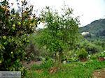 Traditioneel dorp Topolia | Chania Kreta | Foto 14 - Foto van De Griekse Gids