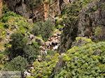 GriechenlandWeb.de Traditioneel dorp Topolia | Chania Kreta | Foto 25 - Foto GriechenlandWeb.de