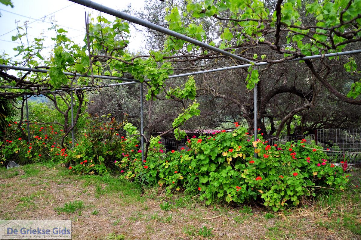foto Traditioneel dorp Topolia | Chania Kreta | Foto 12