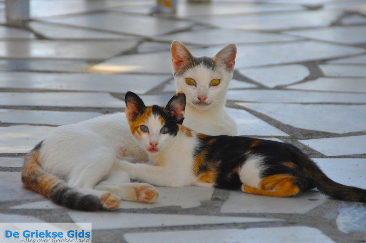 foto Lendas (Lentas) | Zuid Kreta Griekenland 15