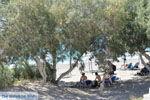 Kalamaki Kreta | Zuid Kreta | De Griekse Gids foto 6 - Foto van De Griekse Gids