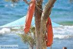 Kalamaki Kreta | Zuid Kreta | De Griekse Gids foto 30 - Foto van De Griekse Gids