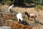Onderweg van Spili naar Preveli | Zuid Kreta | De Griekse Gids foto 3 - Foto van De Griekse Gids