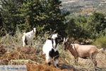 Onderweg van Spili naar Preveli | Zuid Kreta | De Griekse Gids foto 4 - Foto van De Griekse Gids