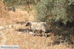 Villa Kapariana bij Mires | Zuid Kreta | De Griekse Gids foto 11 - Foto van De Griekse Gids