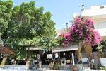 Pitsidia | Zuid Kreta | De Griekse Gids foto 2 - Foto van De Griekse Gids