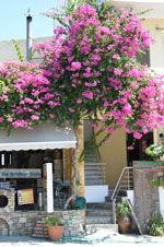 Pitsidia | Zuid Kreta | De Griekse Gids foto 6 - Foto van De Griekse Gids