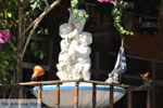 Pitsidia | Zuid Kreta | De Griekse Gids foto 7 - Foto van De Griekse Gids