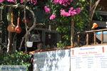 Pitsidia | Zuid Kreta | De Griekse Gids foto 8 - Foto van De Griekse Gids