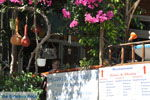 GriechenlandWeb.de Pitsidia | Südkreta | GriechenlandWeb.de foto 8 - Foto GriechenlandWeb.de