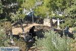 Klooster Odigitria | Zuid Kreta | De Griekse Gids foto 24 - Foto van De Griekse Gids