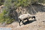 Kali Limenes | Zuid Kreta | De Griekse Gids foto 4 - Foto van De Griekse Gids