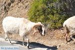 Kali Limenes | Zuid Kreta | De Griekse Gids foto 6 - Foto van De Griekse Gids