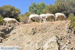 GriechenlandWeb Kali Limenes | Südkreta | GriechenlandWeb.de foto 9 - Foto GriechenlandWeb.de