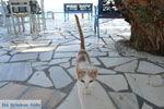 Lendas (Lentas) | Zuid Kreta | De Griekse Gids foto 38 - Foto van De Griekse Gids