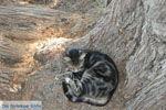 Lendas (Lentas) | Zuid Kreta | De Griekse Gids foto 39 - Foto van De Griekse Gids