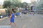 Ezelopvang Aghia Marina bij Petrokefali | Zuid Kreta | De Griekse Gids foto 2 - Foto van De Griekse Gids