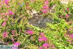 Agia Galini | Zuid Kreta | De Griekse Gids foto 039 - Foto van De Griekse Gids