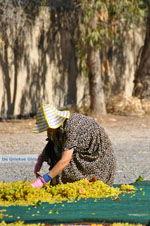 Panagia Kaliviani bij Mires| Zuid Kreta | De Griekse Gids foto 11 - Foto van De Griekse Gids