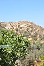 Kamilari | Zuid Kreta | De Griekse Gids foto 8 - Foto van De Griekse Gids