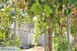Kamilari | Zuid Kreta | De Griekse Gids foto 14 - Foto van De Griekse Gids