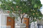 GriechenlandWeb.de Kamilari | Südkreta | GriechenlandWeb.de foto 40 - Foto GriechenlandWeb.de