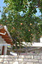 Kamilari | Zuid Kreta | De Griekse Gids foto 43 - Foto van De Griekse Gids
