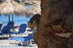 Aghia Pelagia | Kythira | De Griekse Gids foto 106 - Foto van De Griekse Gids