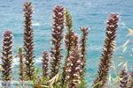 Aghia Pelagia Kythira   Strand Lagada foto 5 - Foto van De Griekse Gids