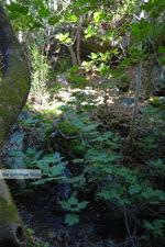 Bij de bronnen van Karavas | Kythira | Foto 18 - Foto van De Griekse Gids