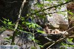 Bij de bronnen van Karavas | Kythira | Foto 22 - Foto van De Griekse Gids