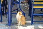 Kapsali Kythira | Griekenland | De Griekse Gids foto 36 - Foto van De Griekse Gids