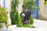Karvounades Kythira | Griekenland | De Griekse Gids foto 10 - Foto van De Griekse Gids
