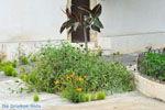 Klooster Mirtidia (Mirtidiotissa) | Kythira | Foto 10 - Foto van De Griekse Gids