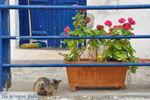 Mylopotamos Kythira | Griekenland | De Griekse Gids foto 5 - Foto van De Griekse Gids
